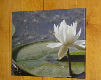 "20""x16"" Photo Canvas: White water lily"
