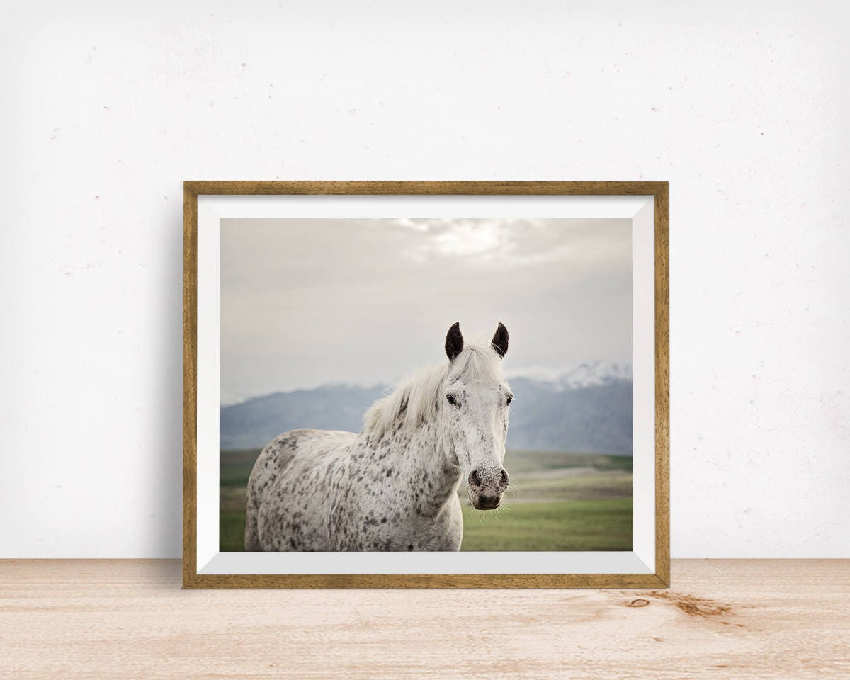 Freckles horse print horse photo in color physical print zoom jeuxipadfo Gallery