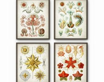 Haeckel Antique Illustration Wall Art Poster Set of 4 - Vintage Marine Biology Home Decor (B219)