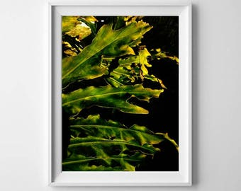 Delicious Monster - Abstract Plant Image Download  Print, Nature Green Leaves Photo, Closeup Leaf, Contemporary Art Foliage Printables
