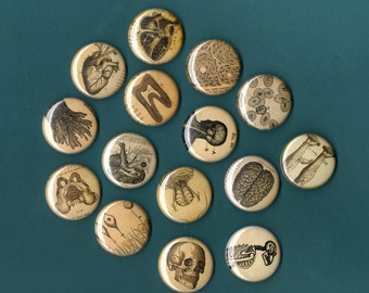 Vintage Anatomy MAGNETS- Set of 6 Assorted