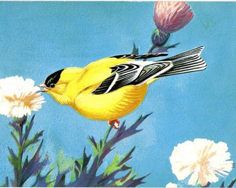 American Goldfinch National Wildlife Federation Songbird Series Vintage Bird Postcard (unused)