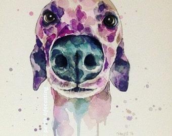 Greyhound Nose Print