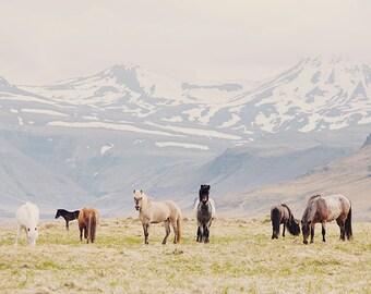 "Icelandic Horse Print, Nature Photography Print, Horse Art Print, Nursery Art, Nature Print, Large Wall Art  ""All the Pretty Horses"""