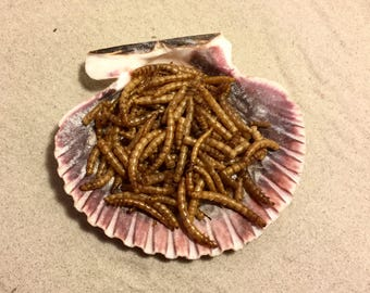 Mealworms ~ Hermit Crab Food