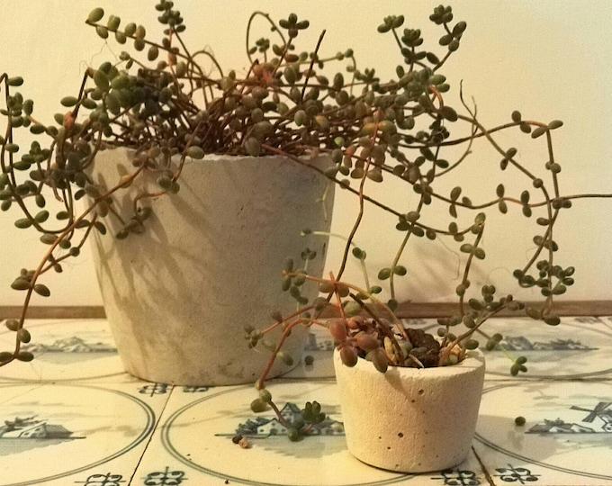 Concrete pot | vaso cemento | grey concrete planters | handmade home deco | handmade concrete Planter | christmas gift | idea regalo arredo