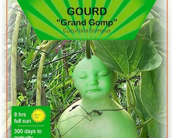 Grand Gomp Seed Packet