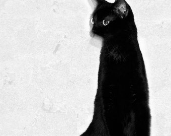 Abstract Cat Photos Animal Photography Minimalist Cat Wall Art Print. Black and White Cat Home Decor, Nursery Room Art, Feline Art Print
