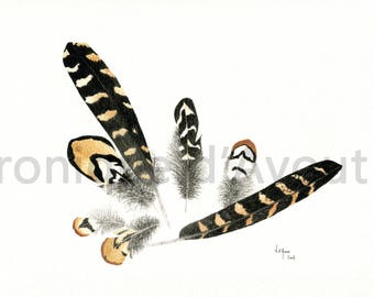 Watercolor study original venerated pheasant feathers