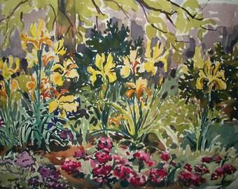 Natural Yellow Iris