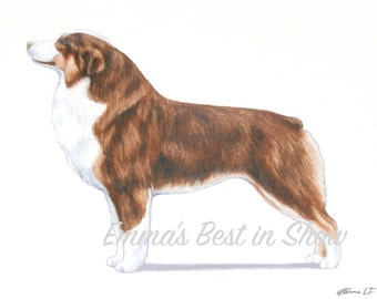 Miniature American Shepherd Dog - Archival Fine Art Print - AKC Best in Show Champion - Breed Standard - Herding Group - Art Print