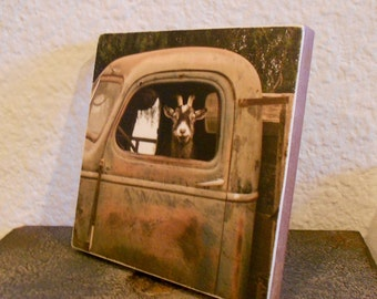 Truck Driver Goat, Photo on 4x4 wood panel