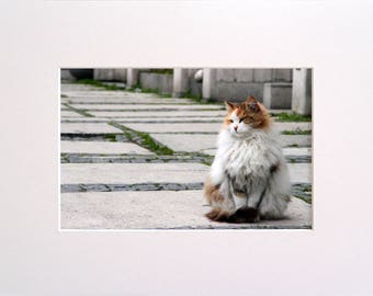 Turkish Cat, Photo in 30x23 cm Mat Board, Wall Art, Home Decor, Limited Edition Photography
