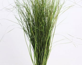 Brown available, dried grass bunch | Dried floral arrangement | natural dried plant | natural dried plant | grass bouquet