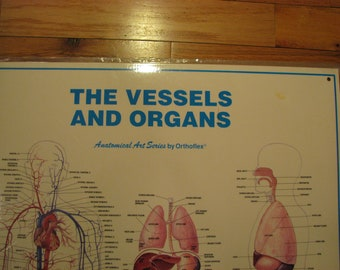 The Human Vessels and Organs Anatomical Art Series Medical Chart