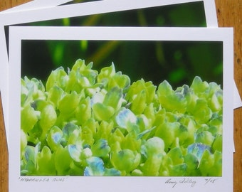 Hydrangea Buds, Photo Art Card
