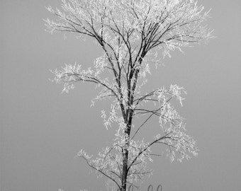 black and white, snow print, tree photography, frost, Christmas, home decor, seasonal art, winter photography, frozen