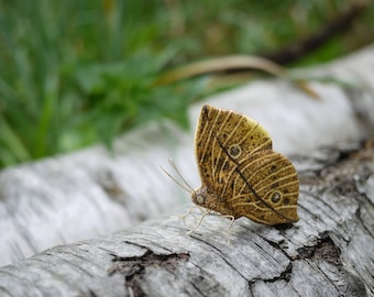 Indian Leafwing Butterfly Ornament