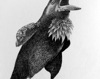 Fine Art Print of Graphite Illustration: Crowing by Christie A. Thompson