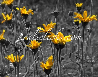 Wild Yellow Prairie Flowers Print  Black White and Gray Metallic pops of golden yellow Home or office wall decor
