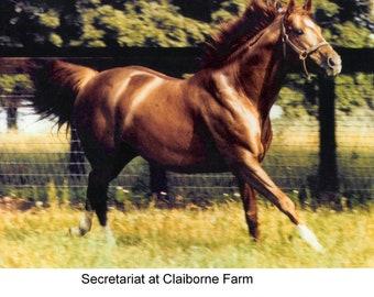 """SECRETARIAT at Claiborne Farm - 10"""" x 8"""""""