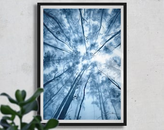 Looking Up, Aquarelle Painting, FINE ART PRINT, Forest, Nature, Blue
