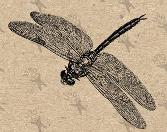 Vintage Dragonfly Printable image Instant Download printable Vintage picture clipart digital graphic for scrapbooking, burlap etc 300dpi