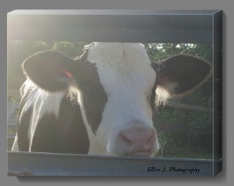 Cow. 11 x 14 inches Canvas- Wall Art
