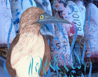 Blue-Footed Booby- Limited Edition Signed Print-Bird Lovers Gift, Seabird and Ocean Enthusiasts