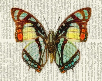 Butterfly orange, aqua, yellow print