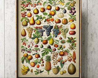 FRUITS BOTANICAL Poster, Fruit Print, Fruit Chart, Pinnaple Print, Grapes, banana, Fruit Tree Art, Vintage Botanical Art