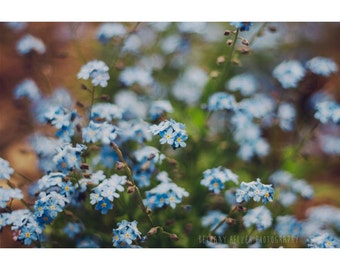 Nature Photography, 8x12 Print, Botanical Print, Blue Flowers, Garden Art, Dreamy Flower Photography, Spring Flowers, Blue, Forget Me Nots
