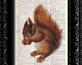 Brown Squirrel -  Vintage Dictionary Print Vintage Book Print Page Art Upcycled Vintage Book Art