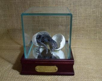 Basilisk Hatchling