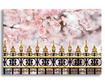 Paris Cherry Blossoms Photo Canvas, Spring Fine Art Photograph Gallery Wrapped Canvas, French Home Decor, Large Wall Art
