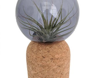 Zinn Mindfulness with Live Air Plant - Blue - Live Trends