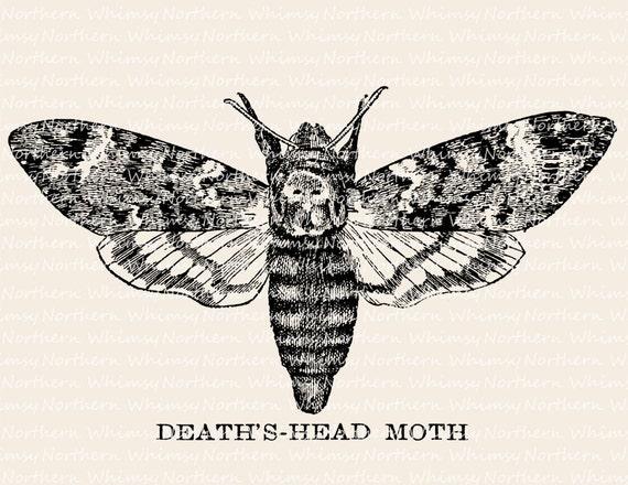 Moth drawing - photo#41