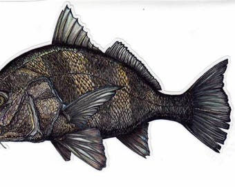 "8"" Black Drum decal"