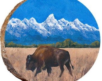 Teton Buffalo Eating Dried Grass - DAU032