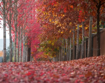 Fall Trees Digital Backdrop