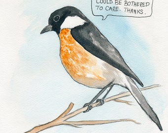 The African Stonechat