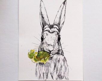 Vers & Wild: konijn met sla