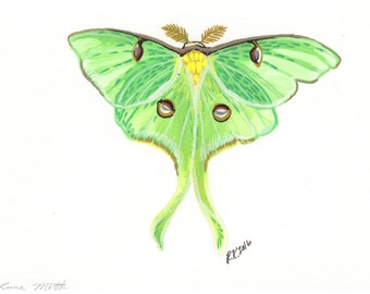 Luna Moth - Original Illustration - Pen and Watercolor - 5x7