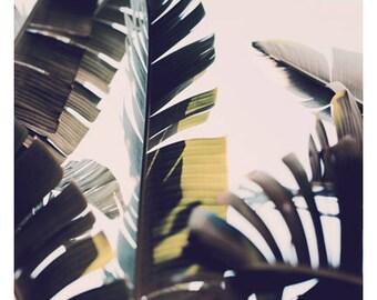 Nature Photograph - Palm Tree - Tropical Art - Travel Photograph - Stand Up Straight - Tropical Print -California - Florida - Oversize Art