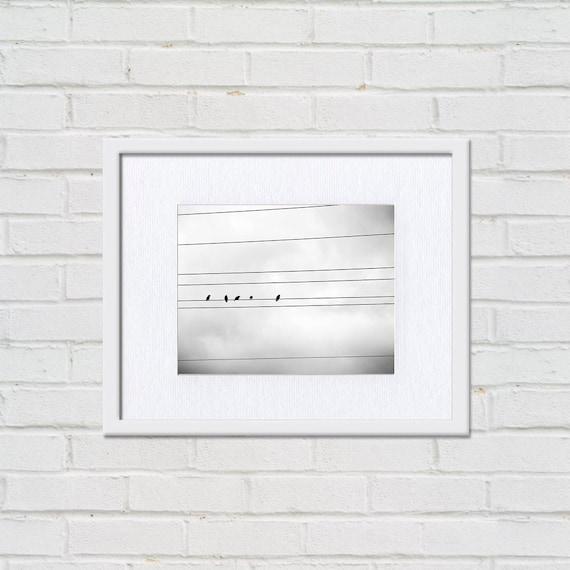 schwarz / weiß Fotografie Vögel auf einen Draht 8 x 10 8 x 12