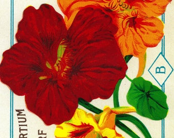 Nasturtium (dwarf) - Vintage Seed Packet (Art Print - Multiple Sizes Available)