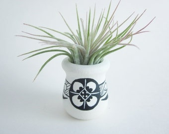 Air plant holder, Wood art vase, small vase, Southwest art