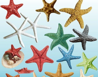 Starfish Clipart, Starfish Clip Art,  Under the Sea Clipart, Ocean Clipart, Beach Clipart, Digital Clipart, Instant Download