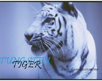 Tungsten Tiger POSTER