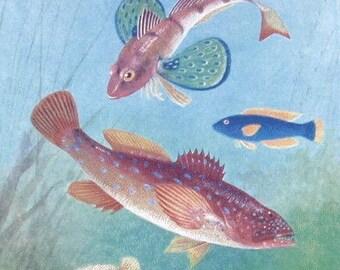 Vintage Original Natural History Lithograph print,Marine life,colorful fish set of three prints